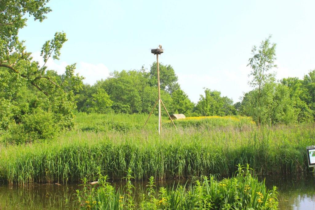 Storch im Vondelpark