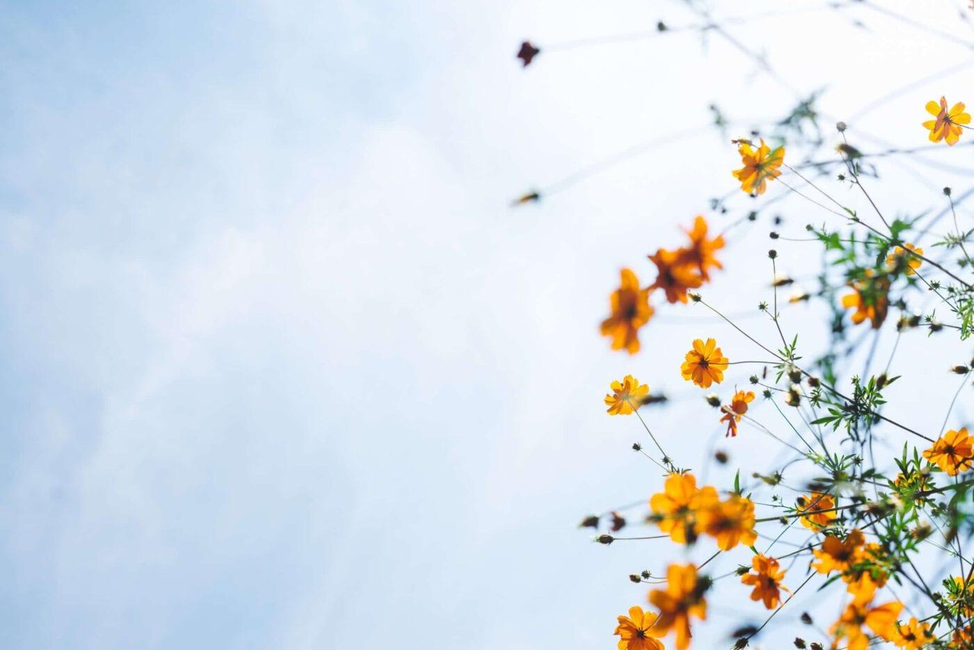 Mit MyMonk zu mehr Ruhe, Glück und Achtsamkeit